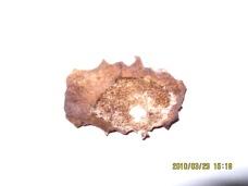 """Figure 8. Vue du sternum par l'arrière. On remarque ici l'effet de biseautage décrit par le Dr Baden mais qui est largement exagéré à ce qu'il aurait dû produire dans un os """"vivant"""", comme on le voit à la figure 9."""