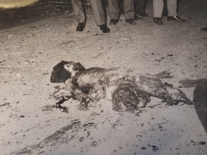Le corps de Jean Corbo, 16 ans, tué par la bombe qu'il s'apprêtait à poser au soir du 14 juillet 1966.